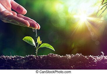 -, irrigazione, nuovo, cura, vita pianta