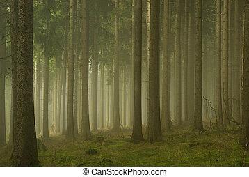 01, nebbia, foresta