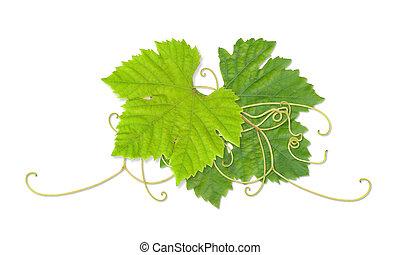 03, foglie, uva