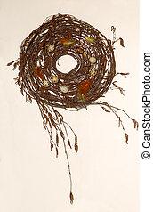1, quaglia, nido