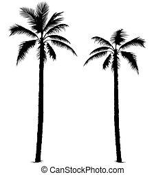 1, silhouette, palma