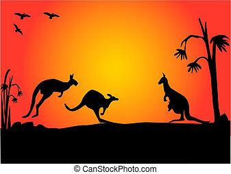 3, tramonto, canguro