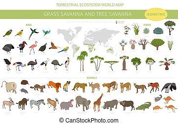 3d, infographic., prarie, pampa., savana, naturale, regione, biome, uccelli, disegno, set., vegetations, ecosistema, erba, isometrico, savana, albero, terreno boscoso, animali, prateria