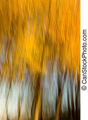 abstract/impressionist, boschetto, olmo