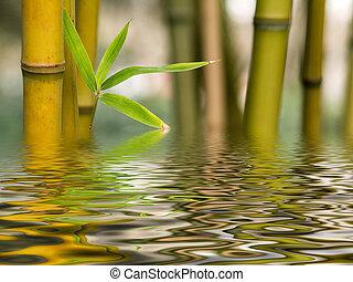 acqua, bambù, riflessione