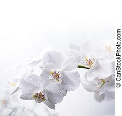acqua, bianco, orchidea