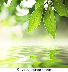 acqua, foglie, sopra
