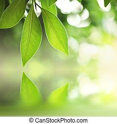acqua, foglie, verde, sopra