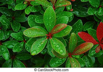acqua, goccioline, foglie, fresco
