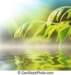 acqua, sopra, erba