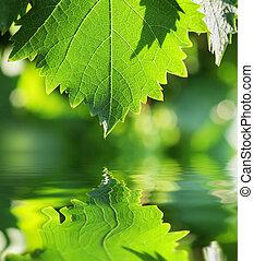 acqua, verde, sopra, foglia