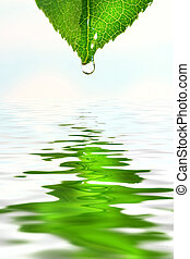 acqua, verde, sopra, foglia, riflessione