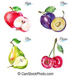 acquarello, bacche, frutte