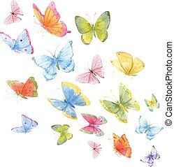 acquarello, farfalle, colorito