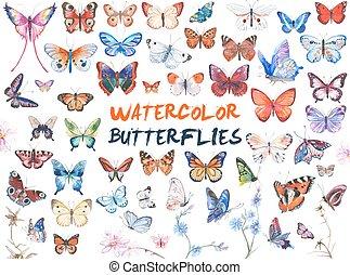 acquarello, farfalle, illustrazione