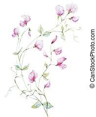 acquarello, fiori, bello
