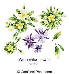 acquarello, fiori, vettore
