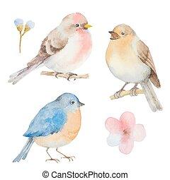 acquarello, flowers., set, uccelli