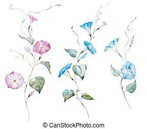 acquarello, gentile, fiori