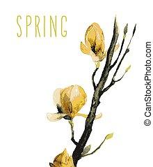 acquarello, magnolia, fiori