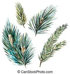 acquarello, raster, abete-albero, rami