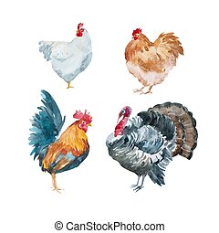 acquarello, tacchino, vettore, gallo, pollo