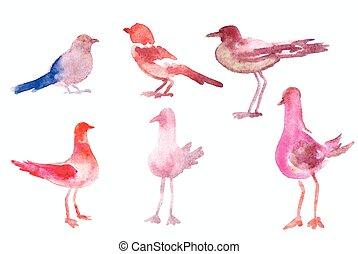acquarello, uccelli