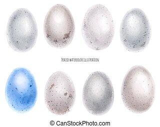 acquarello, uova, set, uccello