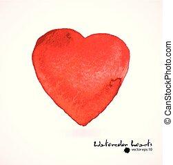 acquarello, vettore, illustration., heart., rosa