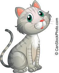 adorabile, gatto