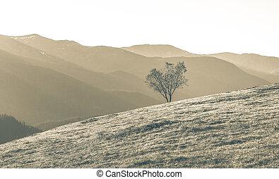 aereo, singolo, crescente, tono, albero, pulito, natura, erboso, montagna, pendio, ambiente, paesaggio, sepia, montagna, coloritura, montagne, bello