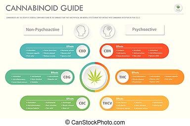 affari, infographic, orizzontale, guida, cannabinoid