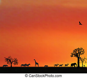 africa, animali, tramonto, illustraion
