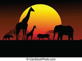 africa, safari, silhouette