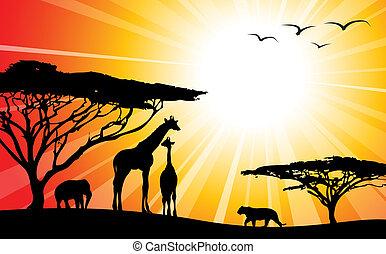 /, africa, silhouette, -, safari