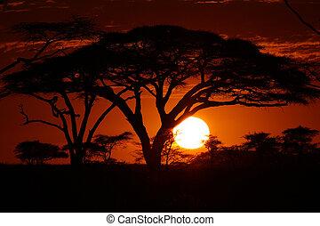 africa, tramonto, safari, albero