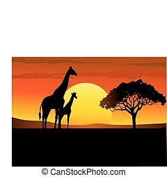 africa, tramonto, safari