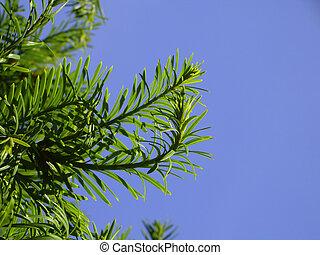 aghi, leaves?, o