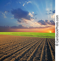 agricolo, campo tramonto