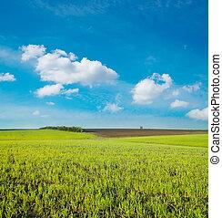 agricolo, campo verde