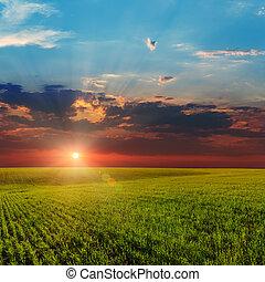 agricolo, sopra, tramonto, campo verde