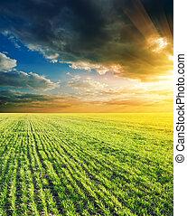 agricolo, verde, campo tramonto