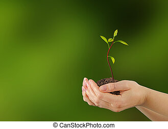 agricoltura, alberello, avocado, regalo, mani