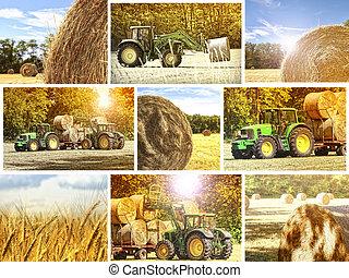 agricoltura, fondo