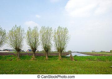 agricoltura, paesaggio, olandese