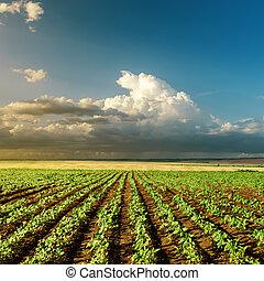 agricoltura, verde, campo tramonto
