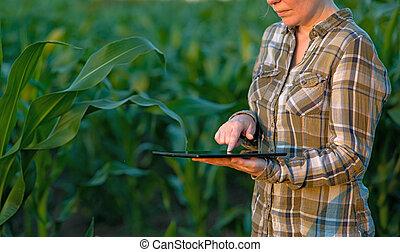 agronomist, granaglie, computer, tavoletta, campo