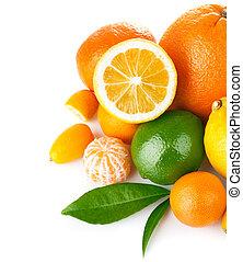 agrume, verde, frutta, foglia, fresco