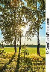 alba, estate, paesaggio rurale