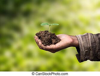 alberello, agricoltura, mano